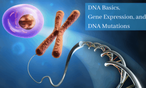 DNA Basics, Gene Expression, and DNA Mutations self-paced, online course
