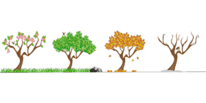 A drawing showing how a tree changes appearance with the changing seasons