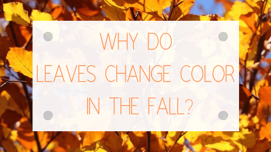 What causes leaves to change color in the fall?
