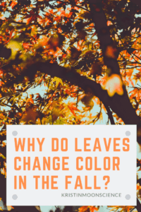 Do you understand the science behind the fall leaf color change