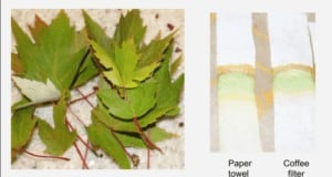 It's easy to perform paper chromatography to separate the different pigments in leaves.