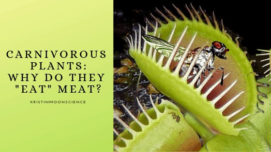 Why do carnivorous plants eat meat