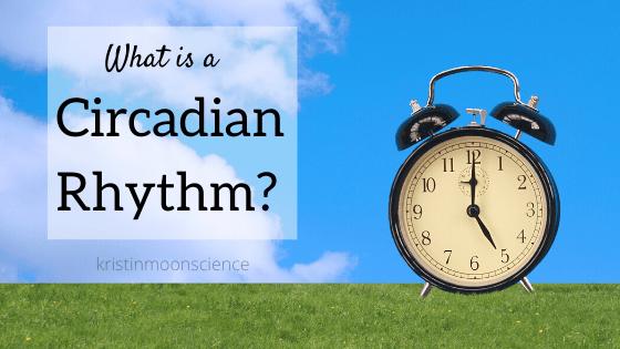 What is the science behind circadian rhythms?