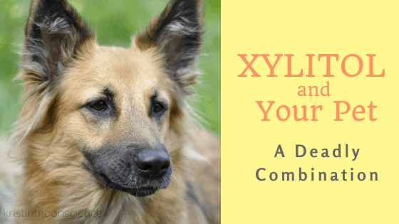 Reasons xylitol is deadly for pets