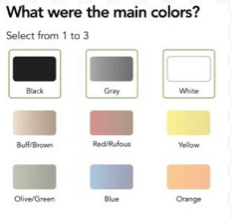 Next, the Merlin app asks you to choose the bird's main colors.  Choose from one to three main colors.