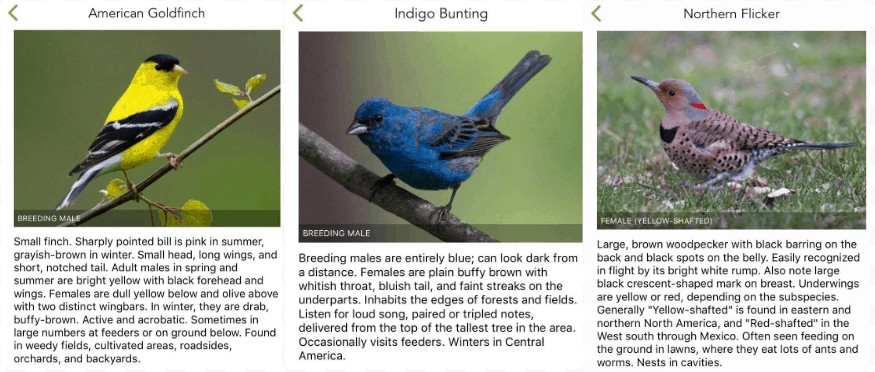 American Goldfinch, Indigo Bunting, and Northern Flicker