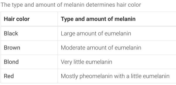 The type and amount of melanin determines hair color