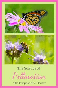 The Science of Pollination