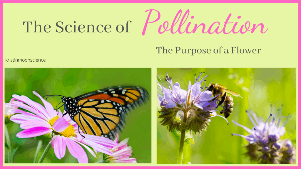The Science of Pollination unit study