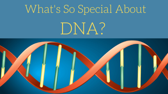 What is DNA? How does it work?
