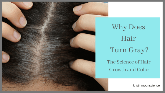 The science behind hair growth and color
