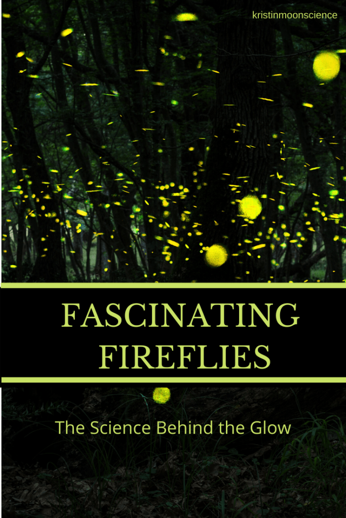 Have you spotted fireflies yet this season? Fireflies (or lightning bugs) have always brought out the kid in me. The science behind their glow is fascinating, and has actually puzzled scientists for more than 60 years. What are fireflies? Where are they found? Why and how do they flash? What happens to them over the winter? Are fireflies disappearing? What can be done to protect fireflies?