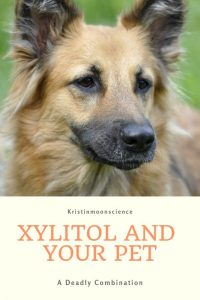 Xylitol can be deadly to your dog