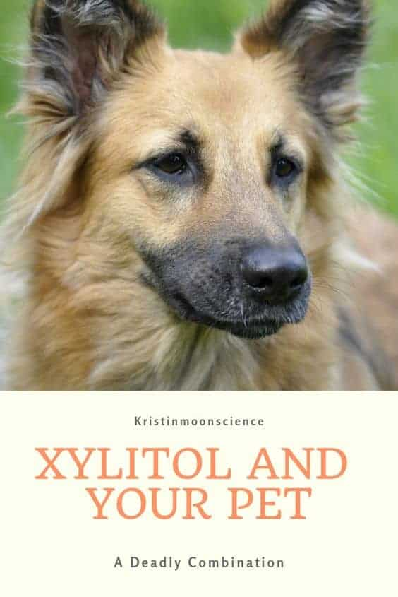There are many foods that dogs should avoid, including chocolate, grapes, onions, and garlic. Increasingly, another ingredient is finding its way into our homes and it's extremely dangerous for pets: xylitol. Xylitol has become a popular sugar substitute for diabetics and others following a low carbohydrate (low carb) diet. #dogs #xylitol #lowcarb #keto