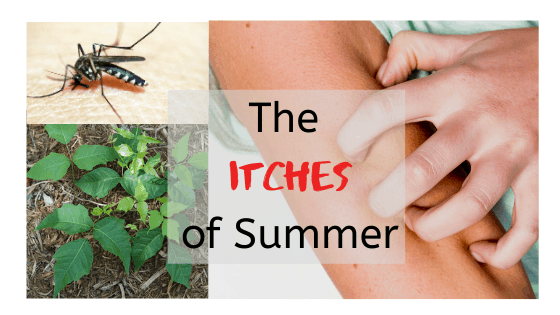 Learn the science behind the itches of summer