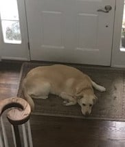 I have inadvertently trained my dog into guilt-tripping me.  I find her by the door each morning, waiting for me to leave for my walk so that she gets her treat.