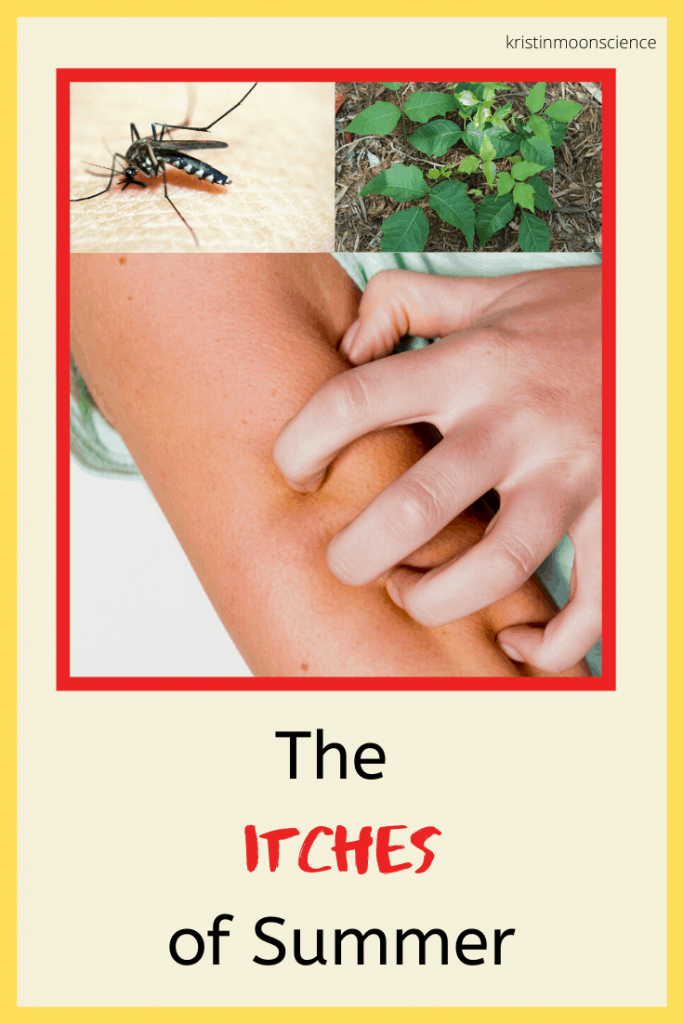 Increased time spent out of doors can lead to exposure to one or more of the scourges of summer:  poison ivy, chiggers, and mosquitoes.   In this post, I explain the science behind the itches of summer, dispel some myths, and provide steps you can take to protect yourself this season.