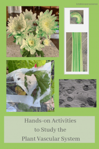 hands-on activities to study the plant vascular system