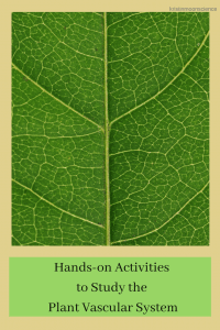 hands-on activities to study the plant vascular system at any age