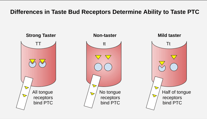 Are you able to taste PTC