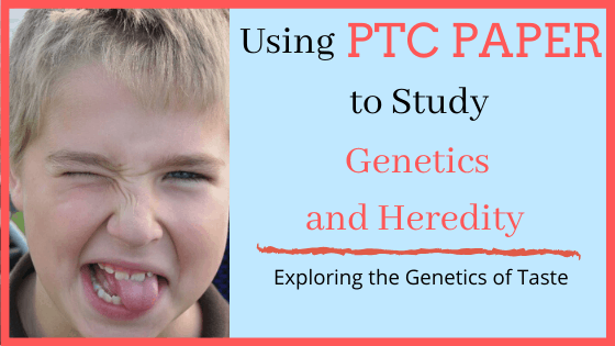 Use PTC paper to explore the genetics of taste
