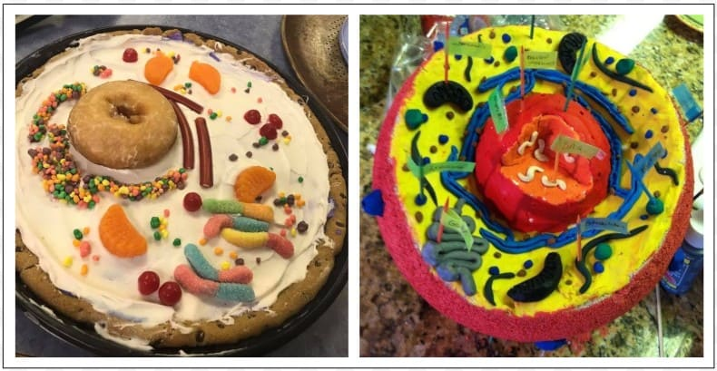 To help students become familiar with the parts of a cell, I encourage them to create cell models using whatever materials they wish.