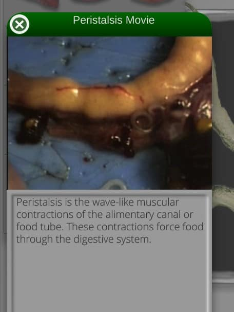 For each part of the frog anatomy, there are videos to watch.  In this video, you could actually watch the process of peristalsis as food is pushed through the intestines.