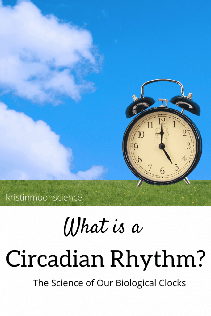 What is a circadian rhythm? How are our circadian rhythms controlled by sunlight?  Why is Daylight Savings Time so hard on our sleep cycle?  Do plants and animals have circadian rhythms?