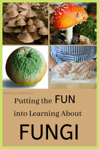 Think studying fungi is boring? Think again. Learn what makes members of Kingdom Fungi unique, explore the many ways fungi benefit life on our planet, and investigate fungi with hands-on activities and videos.