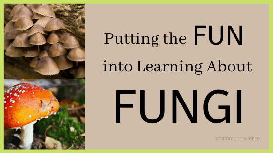 Fun ways to learn about fungi