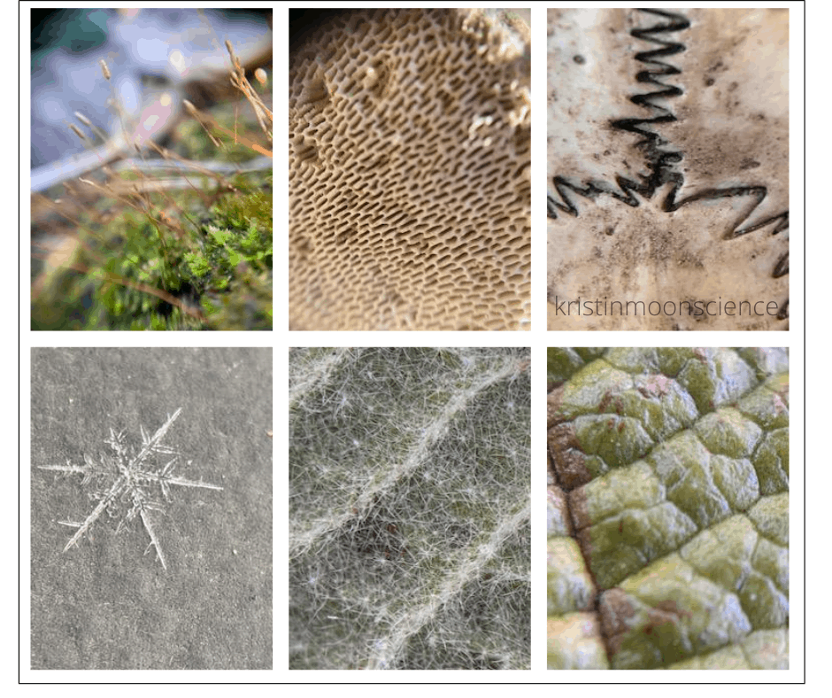 Macro photos of moss, mushroom gills, bone, a snowflake, and leaves