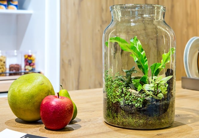 A terrarium is a fun way to bring the outdoors in