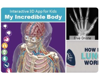 Anatomy and Physiology Resources Pinterest Board