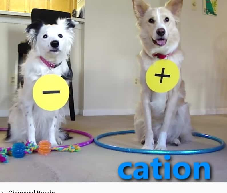 Dogs Teaching Chemistry is cute and edcuational