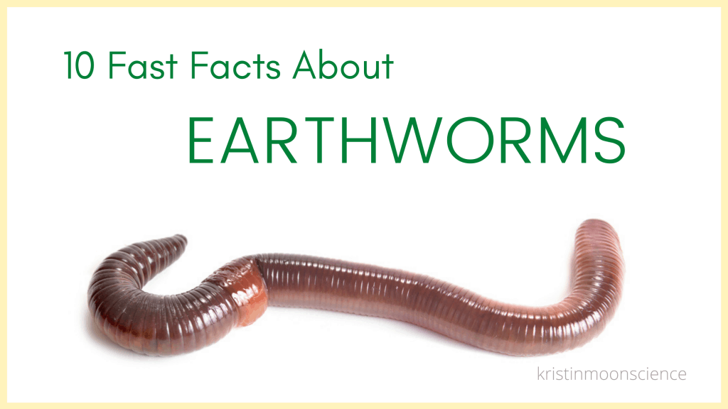 10 Fast Facts About Earthworms