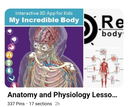 My Anatomy and Physiology Pinterest Board